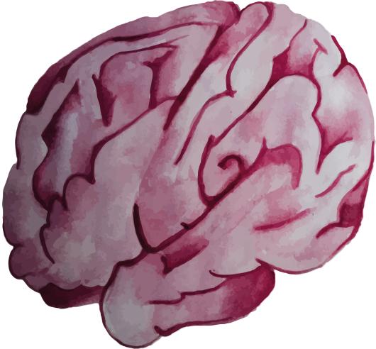 cerebro-orden
